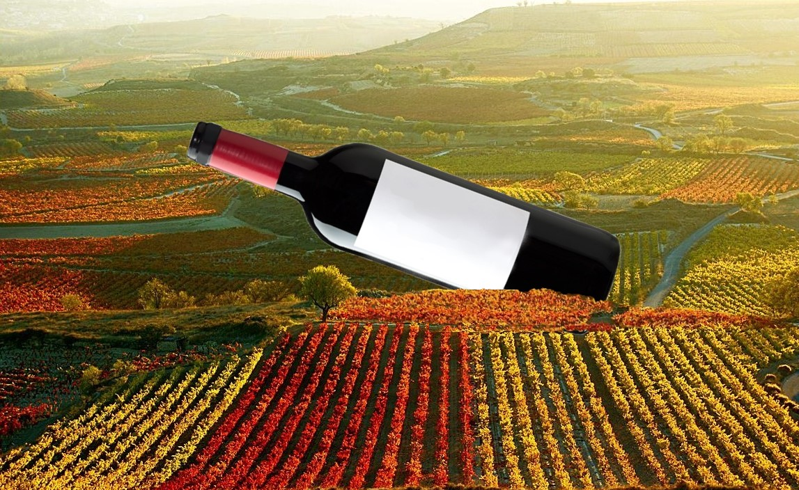 Botella tamaño gigante en viñedo