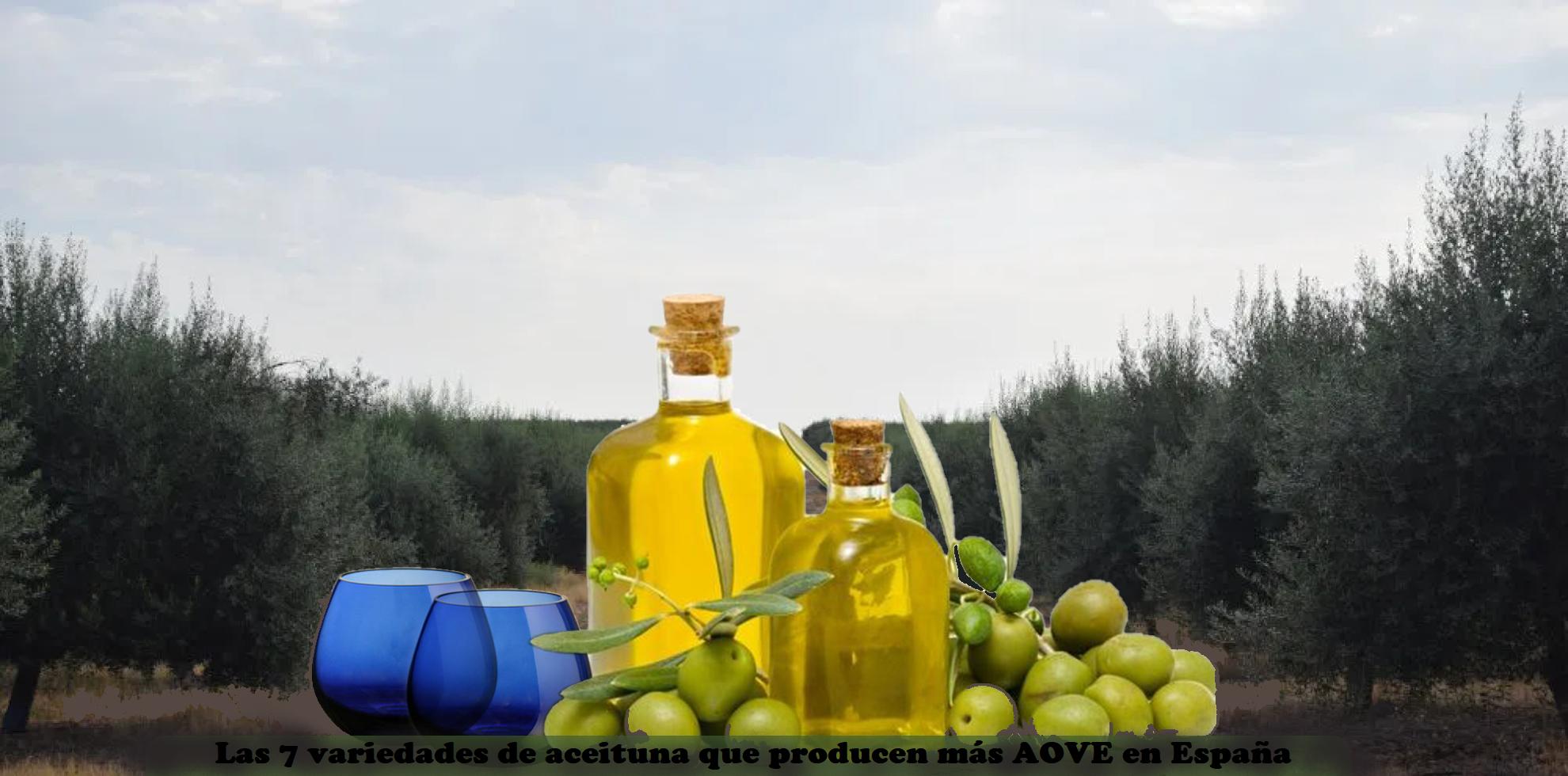 7 variedades de aceituna