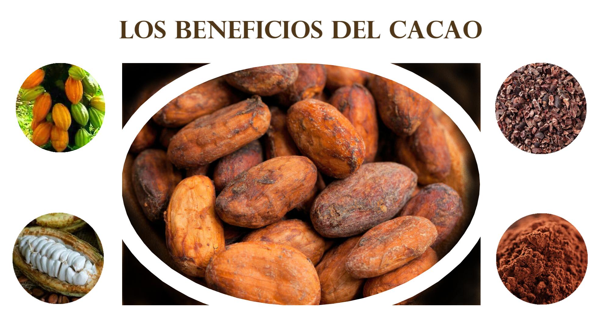 El cacao y sus beneficios